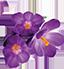 Flor Supremo AzulMax